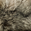Closeup of beautiful polar Fox fur - Stock Photo