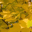 Autumn - yellow leaves — Stock Photo