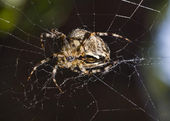 Close-up of Beautiful spider — Stock Photo