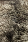 Black Polar Fox fur — Stock Photo