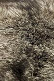 Black Polar Fox fur — Stock Photo