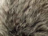 Background and texture - polar Fox fur — Stock Photo