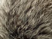 Background and texture - polar Fox fur — Stock Photo