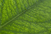 Small droplets on the leaf — Stock Photo
