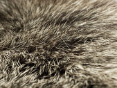 Polar Fox fur, useful as background — Stock Photo