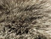 Polar Fox fur, useful as background — Stock Photo