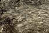 Polar Fox fur. Useful as background — Stock Photo