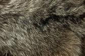 Warm polar Fox fur. Useful as background — Stock Photo