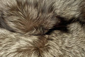 Closeup of polar Fox fur — Stock Photo