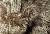 Texture - Beautiful polar Fox fur — Stock Photo
