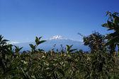 Majestátní hory kilimandžáro, tanzanie — Stock fotografie