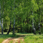Wood road — Stock Photo