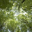 Stock Photo: Sky through green foliage