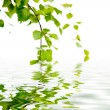 Stock Photo: branch of a birch and reflexion in water