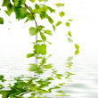 Stock Photo: Branch of birch and reflexion in water