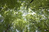 El cielo a través del follaje verde — Foto de Stock