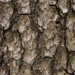 Textural bark — Stock Photo #1437842