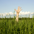 Hand in a grass — Stock Photo