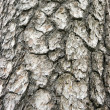 Tree bark — Stock Photo #1479346