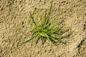 Plant on a sandy beach — Stock Photo