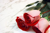 Three roses on a marble table — Stock Photo
