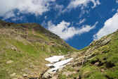 Alpine walk in summer — Stock Photo