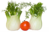 Two fennel and tomato — Stock Photo