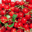 Sour cherries — Stock Photo #2119211