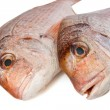 Pagellus sea bream closeup — Stock Photo
