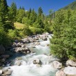 Vermigliana stream, Trentino, Italy — Stock Photo