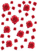 Red roses on white background — Zdjęcie stockowe