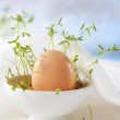 Fresh brown egg — Stock Photo
