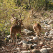 Deer family in national park — Stock Photo #1364772