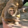 Monkey with banana — Stock Photo #1365654