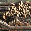 Timber factory — Stock Photo
