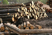Timber factory — Stock Photo
