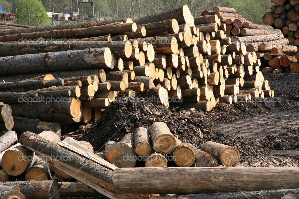 Timber factory storage of piled wood.  Stock Photo #1366307