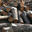 Royalty-Free Stock Photo: Timber factory