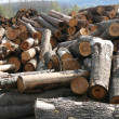Stock Photo: Timber factory