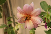 Splendid vivid flower — Stock Photo