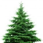 el desnudo árbol de Navidad — Foto de Stock