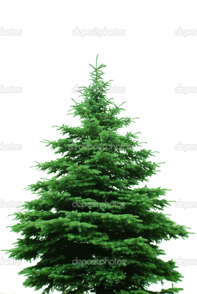 The Bare Christmas tree ready to decorate — Stock Photo #1420051
