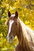 Horse on yellow — Stock Photo