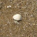 Sand — Stock Photo #1508656