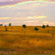 Steppe — Stock Photo #1508774