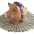 Moneybox - pig  on dollars. — Stock Photo