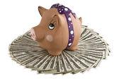 Moneybox - pig on dollars. — Stock Photo
