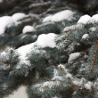 Fir in snow — Stock Photo #1447172