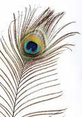 The peacock eye — Stock Photo