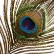 Stock Photo: Peacock eye macro